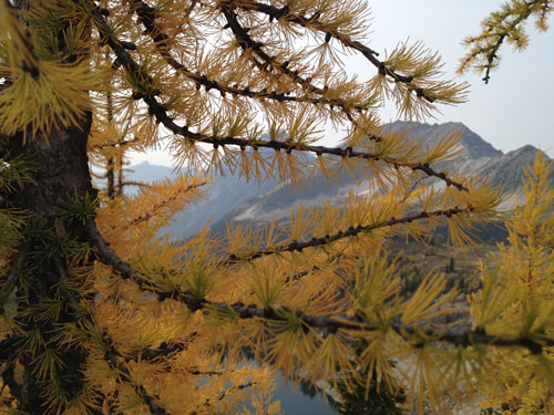 Fall Larch color