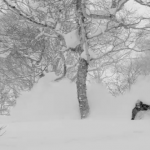 powder skiing japan