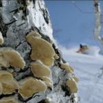 A skier's journey China